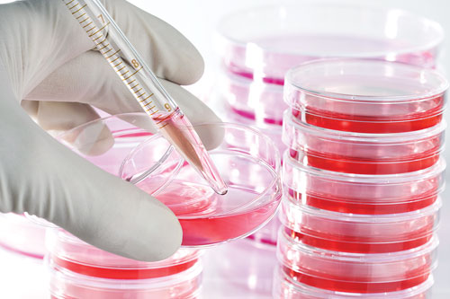 cell-culture-media